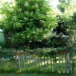 Le Petit Poisson Vert in het Bretonse Plouhinec