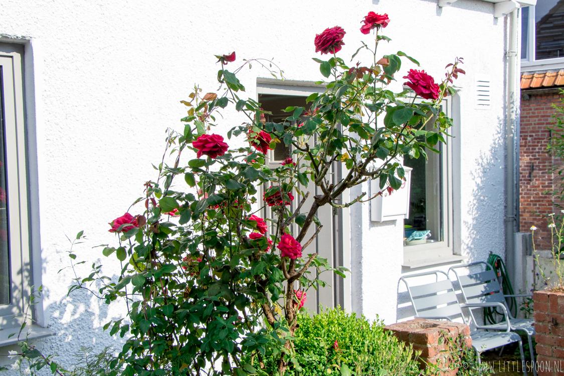 Wit Huisje Zeeland // Een huisje om verliefd op te worden